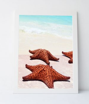 Starfish Wishes Photograph