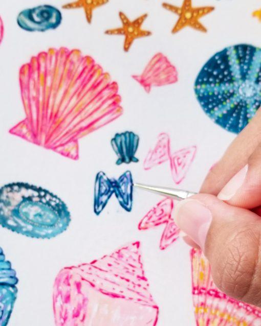 Salty Kai Seashell Illustrations