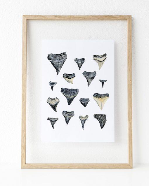 Shark Teeth art print inside a frame