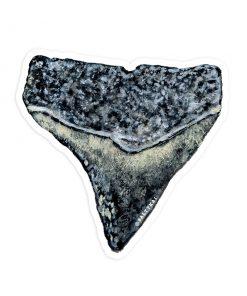 Shark Tooth Sticker